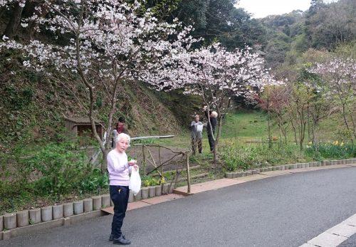 DSC 2264 2 500x347 - 桜が咲いたら……