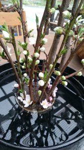 DSC 2274 1 169x300 - 桜が咲いたら……