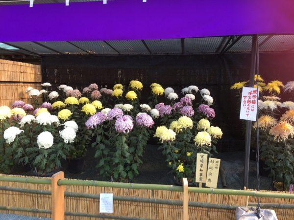img 2231 - 菊花展へ
