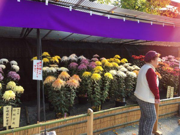 img 2232 - 菊花展へ