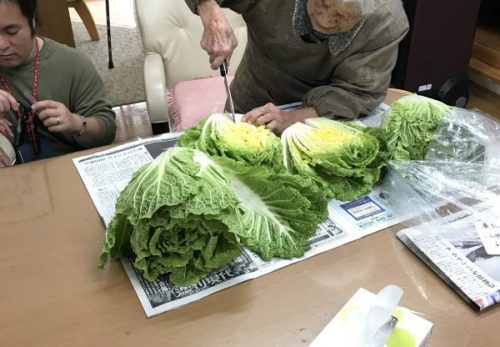 img 8329 500x347 - 白菜を漬けるよ!!