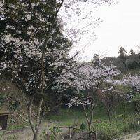 img 9282 200x200 - 桜🌸の花見ツアー1日