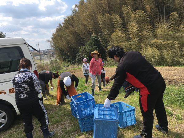 img 7304 - 竹の子掘り