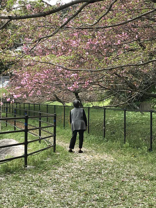 img 9395 - お花見🌸🌸🌸
