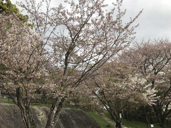 img 9417 - お花見🌸🌸🌸