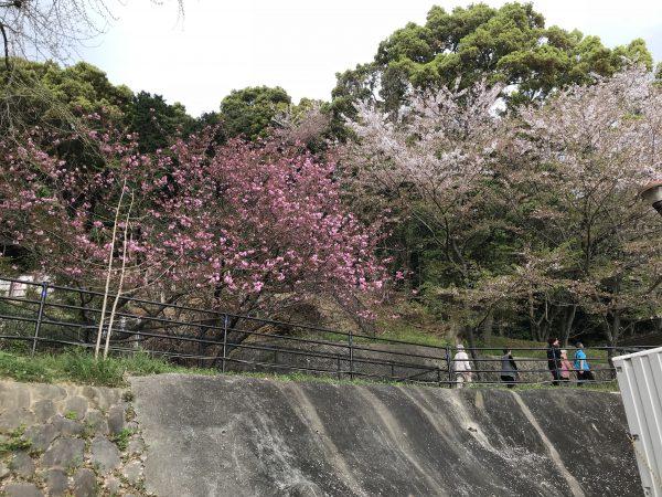 img 9424 - お花見🌸🌸🌸