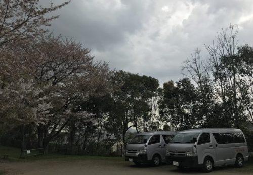 img 9427 500x347 - お花見🌸🌸🌸