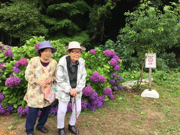 img 2726 - 紫陽花を見に🤗